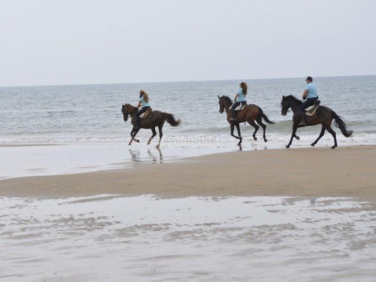 Experiencia a caballo en Doñana