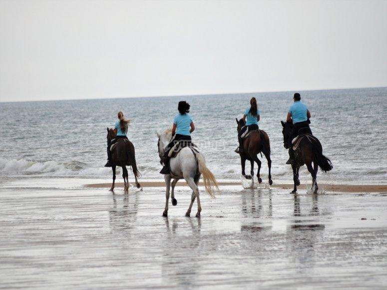 Podras montar a caballo en la orilla del mar
