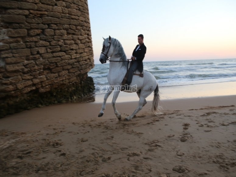 Horse riding tour for advanced riders
