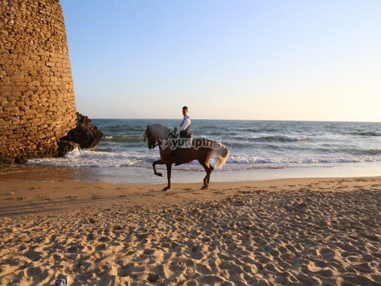 An exclusive horse riding tour