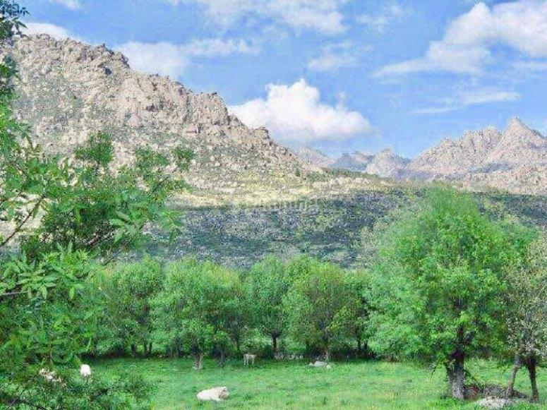 Paesaggi verdi