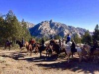 Cavalli e montagne sullo sfondo
