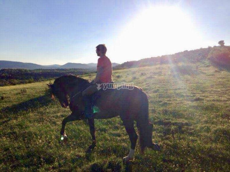 Controllo del cavallo