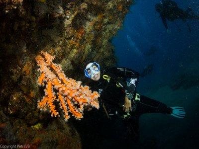 10 immersioni a Lanzarote dalla barca + 2 gratuite