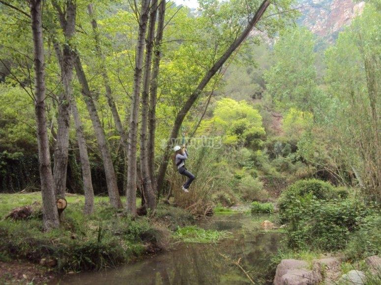 The treetop adventure course