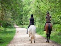 骑马的马竟然