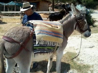 在骆驼公园徒步旅行与驴