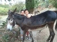 Junto al burro