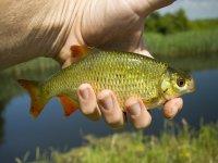 Pesca en el pantano