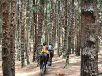 沿山谷Iruelas骑马上山路线踩踏
