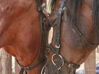 Our beautiful horses