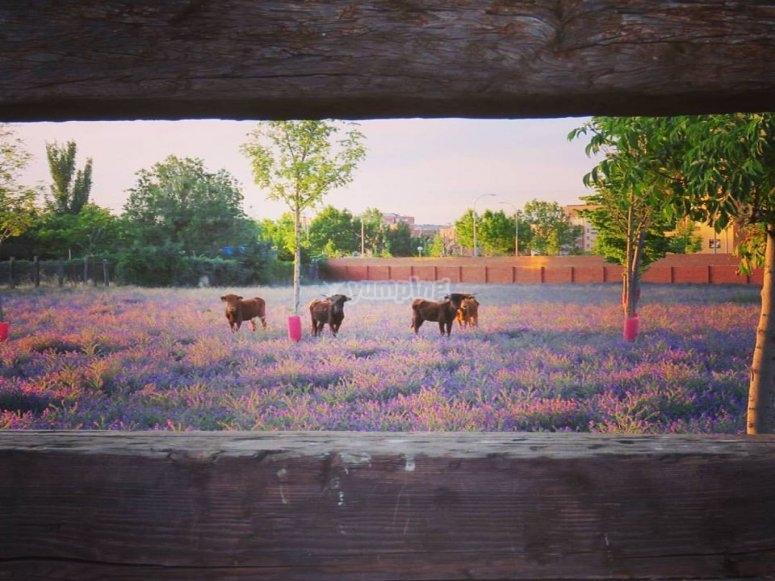 nuestros toros