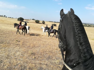 Horse Riding Tour in Sierra Norte Madrid + Snack