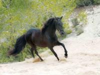 Ruta a caballo en Cala Ratjada playa y montaña 2h
