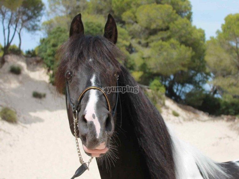 Uno dei cavalli