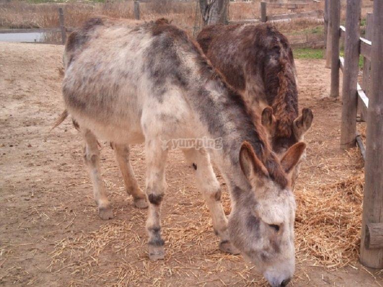 Our lovely donkeys
