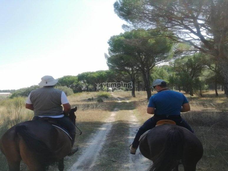 Bajo los pinos a caballo