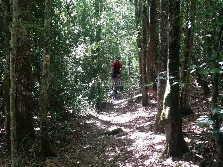 por el bosque