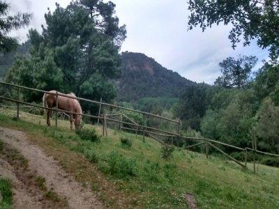 Jornada a caballo y comida puente Constitución