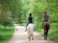 Un paseo por la sierra andaluza