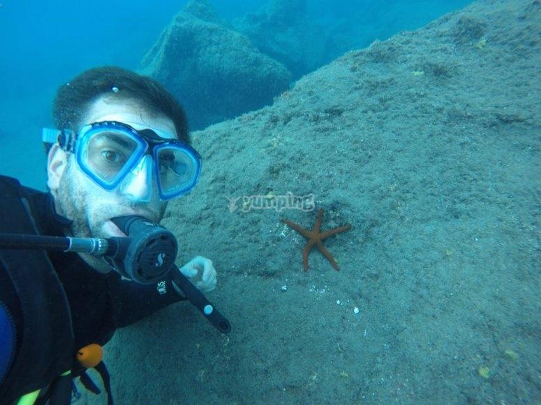 潜水员夫妇显示海星