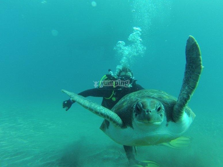 Immersioni con le tartarughe