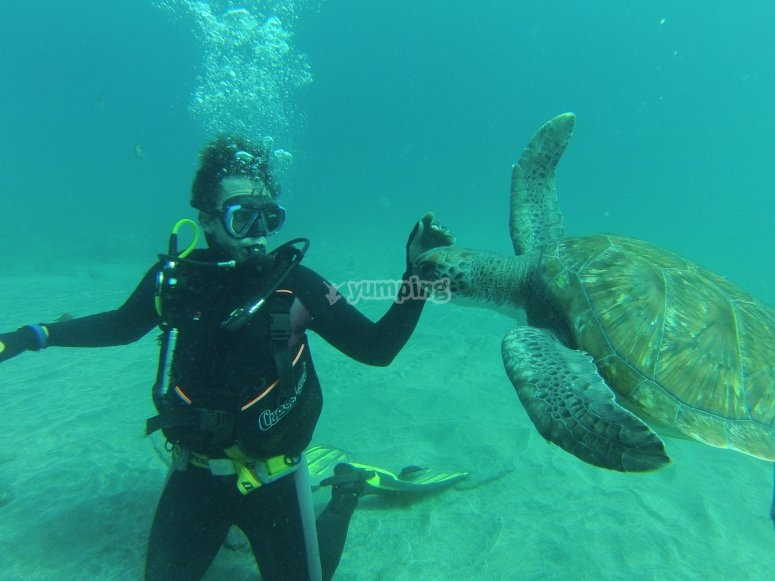 潜水员潜水与海龟触摸海龟
