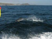 Delfin en Costa Adeje