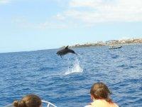 显示跳到从船上海豚