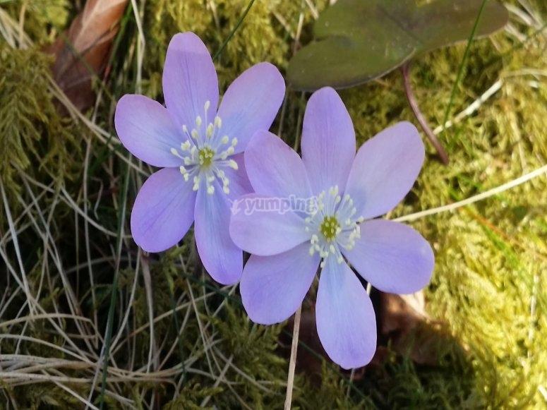 Flowers in Navarra