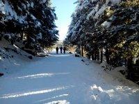 Snowy path between trees