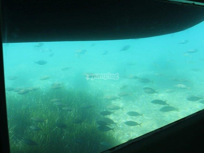 船的透明背景