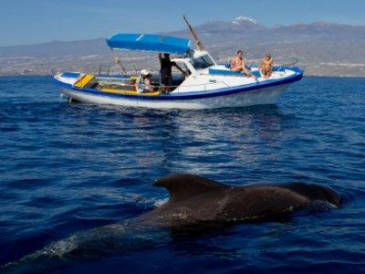 Halcón Blanco Avistamiento de Cetáceos