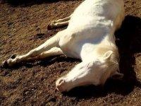 Caballo descansando al sol
