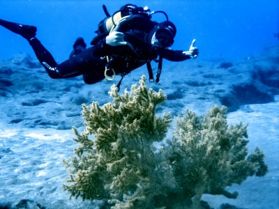 Two diving immersions certified divers Lanzarote