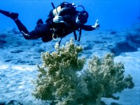 Dos inmersiones buceadores certificados Lanzarote