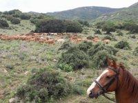 Disfrutando de la naturaleza con un paseo a caballo