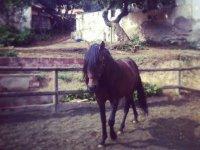 Bello ejemplar equino