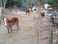 Nuestros preciosos ponis