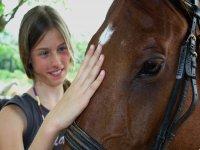 Mimando a los caballos
