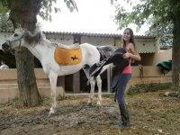 Preparando al caballo