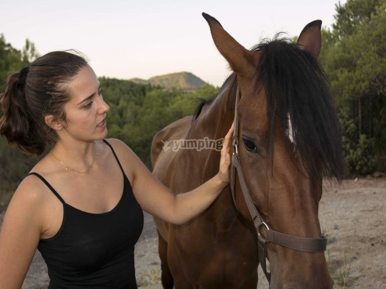 Get to know the beautiful horses