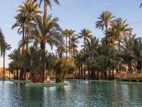 Navega entre palmeras