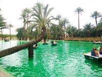 Un lago lleno de palmeras