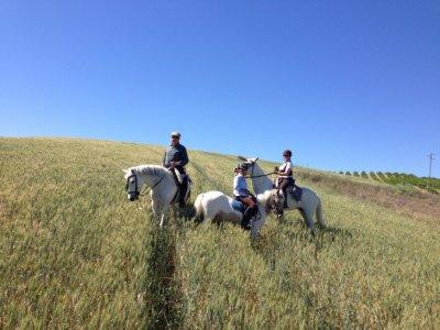1 ora sul percorso a cavallo da Palma del Río