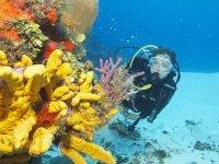 con coralli