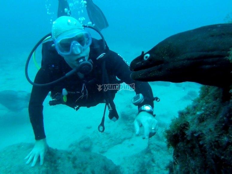 Exoticas especies marinas