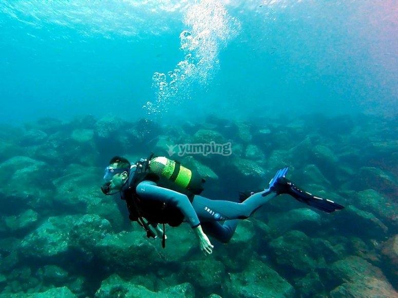 Explorando el fondo marino de Tenerife