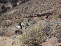 En caballos junto al Teide