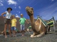 Giro di Timanfaya con cammello
